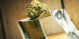 Increase in marijuana use economic insecurity