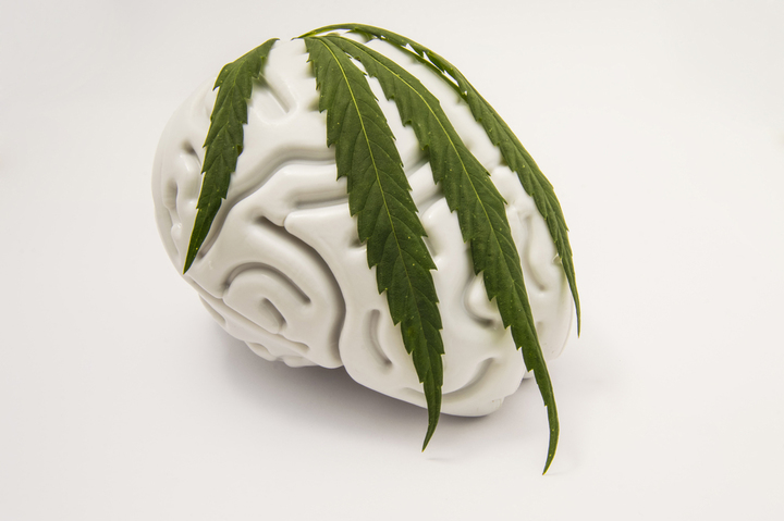 Marijuana blunts natural reward responses in the brain   Addiction Now   Substance Abuse, Drug Addiction and Recovery News Source
