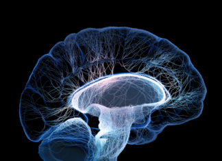 New research finds brain systems that can help curb cocaine abuse
