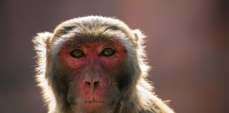 anti-heroin_vaccine_closer_to_reality__stops____high____in_primates_720